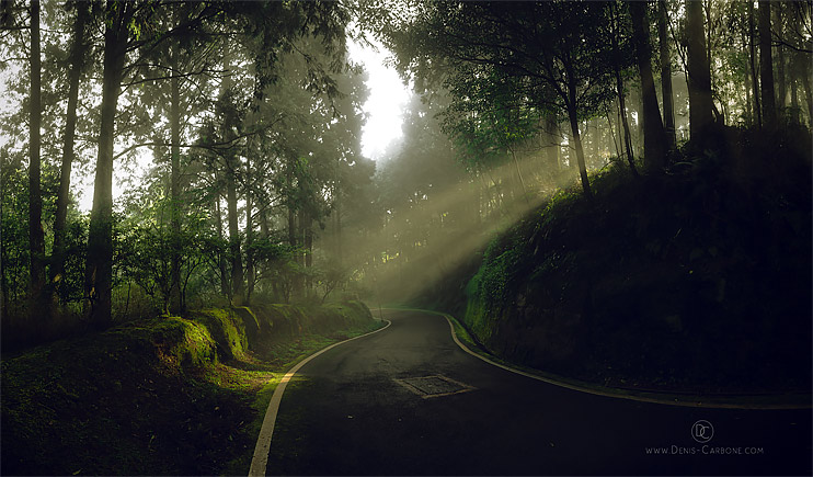 Alishan Forest Light